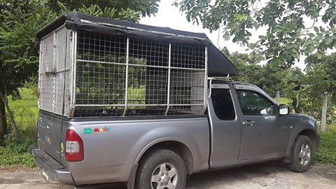 รถรับส่งหมาแมว